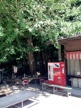 150905_yamagata1.jpg